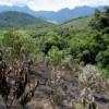 Fire threatens new Plantation