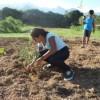 School Tree Planting