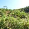 Tree planting update