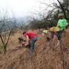 Tree Planting begins!