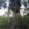 Canopy hide gets new ladder!