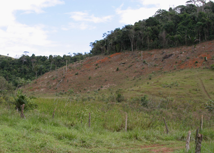 deforestation-196_9688-ed-regua-420x300