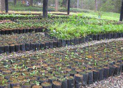 tree-planting-4530-rachel-walls-420x300