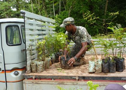 tree-planting-p1010255-alan-martin-420x300