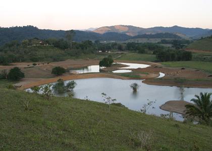 wetland-050702-049-alan-martin-420x300