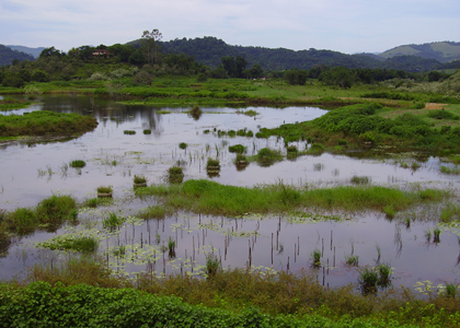 wetland-060223-011-alan-martin-420x300