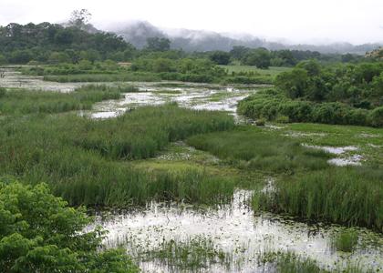 wetland-080125-015-alan-martin-420x300