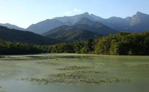 wetland-brazil-2014-4-185-joy-braker