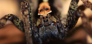 7-spider-so_9866-chris-knowles