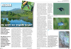 article-dragonfly-news-67