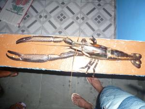 Large Crustacean